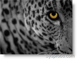 Install Mac OS X Leopard without VT on VMware